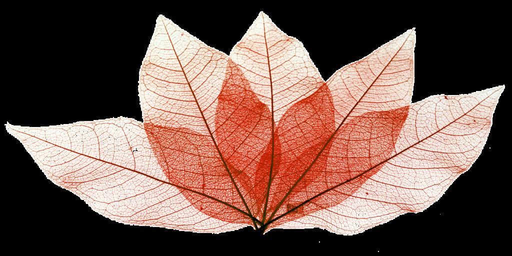 ENGELKARTON_DEKOR PAPIER_Für die Oberflächenveredelung  [ Laminat | Möbel | Böden | Innen-/Außenanwendungen - Fassaden | Küchenarbeitsplatten uvm. ]_Decor Paper
